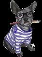 France - Dog Barking - Ouaf Ouaf