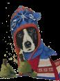 Norway - Dog Barking - Voff Voff